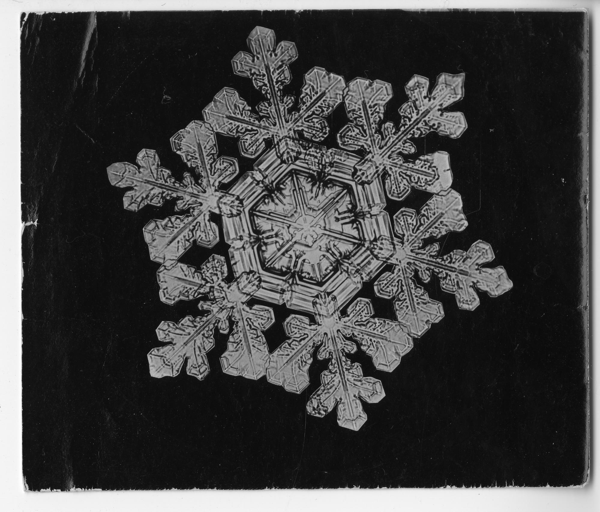 Fiocco di neve fotografato da Wilson Bentley